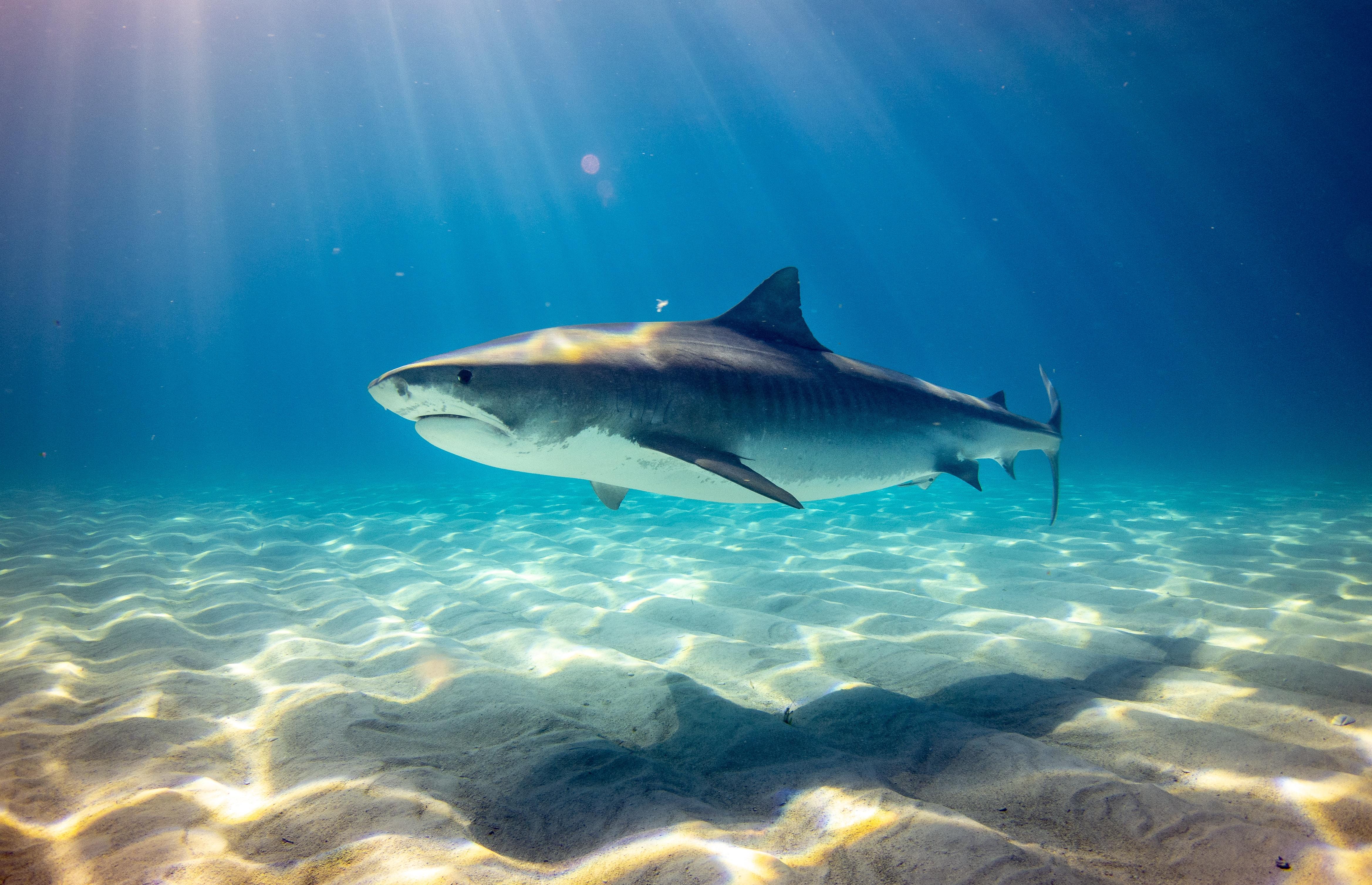 Sharks in Lake Michigan?